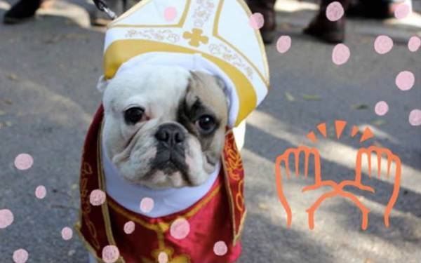 10 Dogs Who Owned 2014