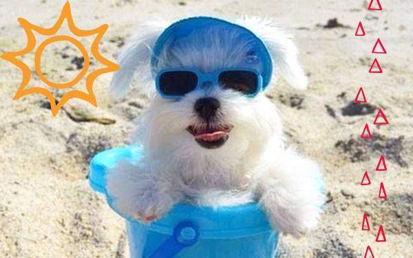 11 Hot Pet Looks for Summer