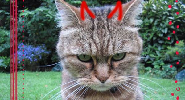 How to Know if Your Cat is an Evil Mastermind