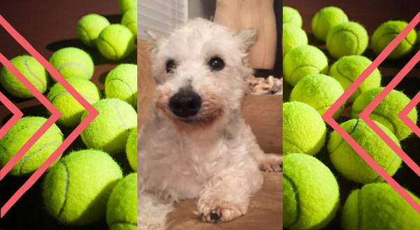 Nice Try, Human. Get Your Own Tennis Ball! [VIDEO]