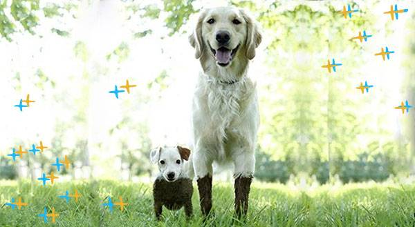 13 Muddy Puppies About to Get Their Paw Prints All Over Your Heart