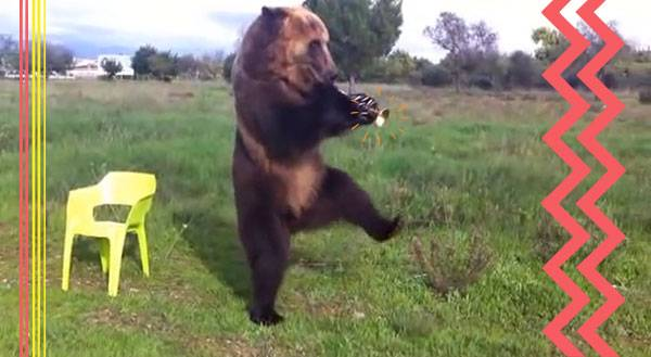 Cats Aren't the Only Musical Animals .... [Videos]