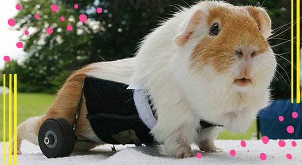 Differently Abled: 11 Pets Rockin' it on Wheels