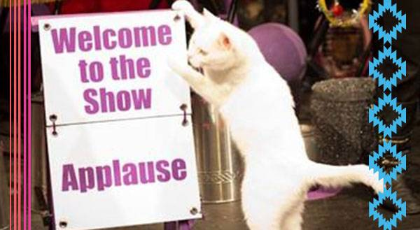 9 Reasons Why You Might Want to Run Away & Join the Cat Circus