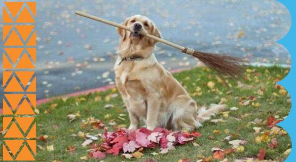 EARNING THEIR KEEP: 11 Dogs Helping with the Chores