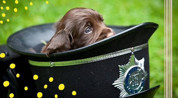 """Police Puppies Who Put The """"Aw!"""" in Law Enforcement"""