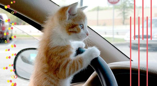 ROAD TRIP! 9 Pets Get Their Kicks on Route 66