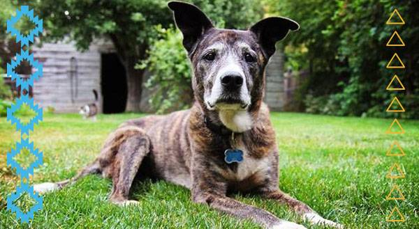 9 Awesome Reasons to Adopt a Senior Pet