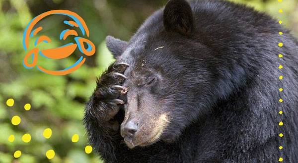 WATCH: Bears Dance, Get In Touch With Their Wild Side!