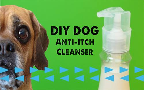 Watch: DIY Dog Shampoo That Your Dog (And You!) Will Actually Want to Use