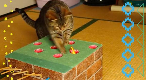 Watch This Cat Become a Whack-a-Mole Champ