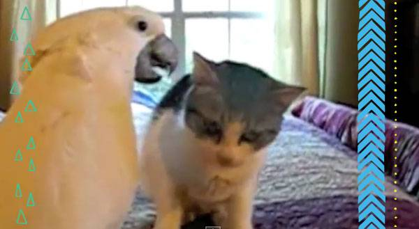 Dayum, Son! Sexy Parrot Puts The Moves on a CAT! [VIDEO]