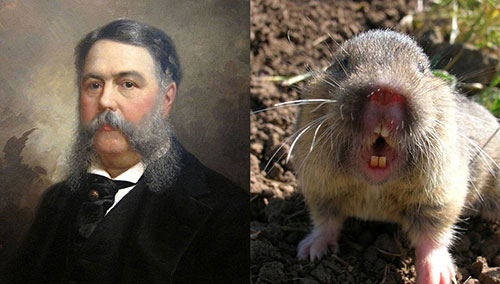 Chester Gopher