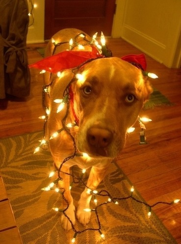 sneak your pet into a holiday party 5
