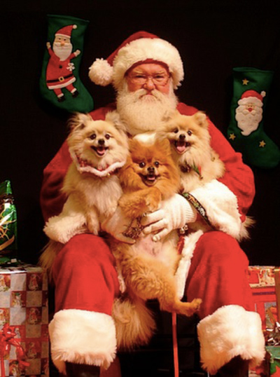 throw your pet a holiday party6