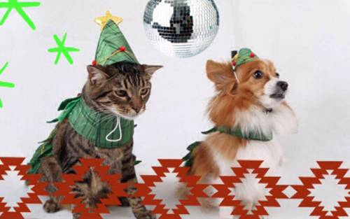 How to Throw The Perfect Holiday Party for Your Pet