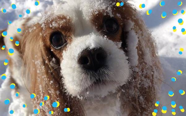 Are Your Pets Prepared for Snowmageddon?