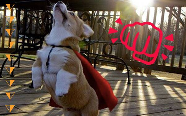 11 Superhero Pets About to Soar into Your Heart