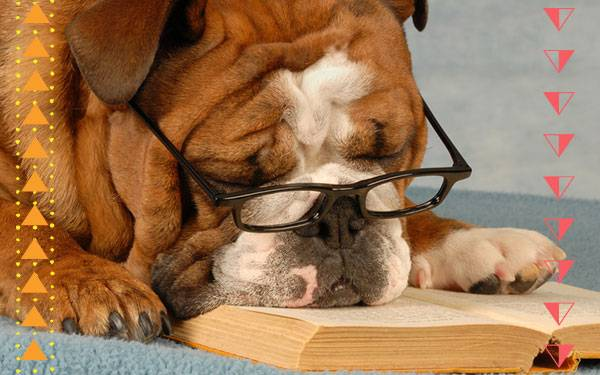 How Therapy Dogs are Teaching Kids to Read