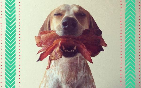 11 Dieting Pets Enjoying Their Cheat Day