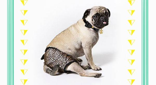 11 Ridiculously Expensive Accessories for Your Label Loving Pet