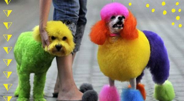 Doggie 'Do's and Don'ts: How to Safely Dye Your Pet's Fur