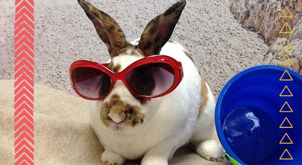 9 Pets Beat the Heat With MORE Hot Looks for Summer!