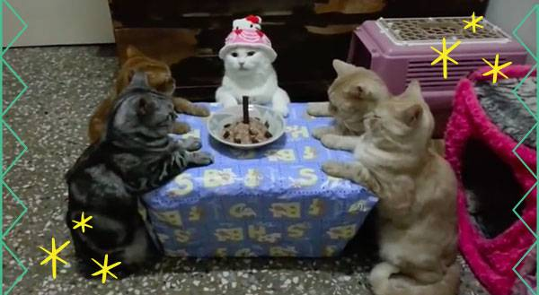 You HAVE to See These Cats Having a Hello Kitty Birthday Party