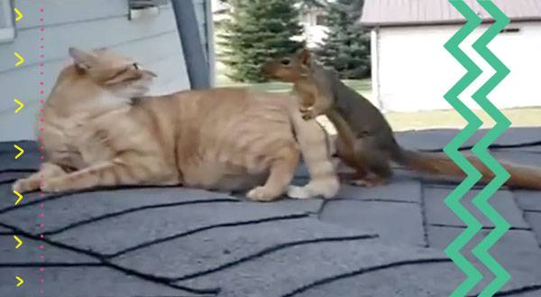 Watch This Real Life Animal Odd Couple Snuggle on the Roof