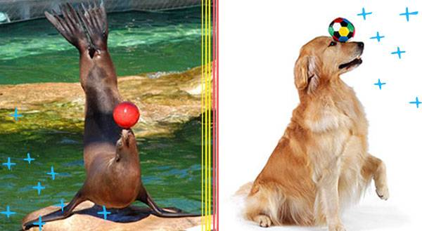 9 Reasons Why Seals are Actually Dog Mermaids