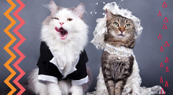 We Now Pronounce You Pet and Pet: 9 Pet Couples Get Married!